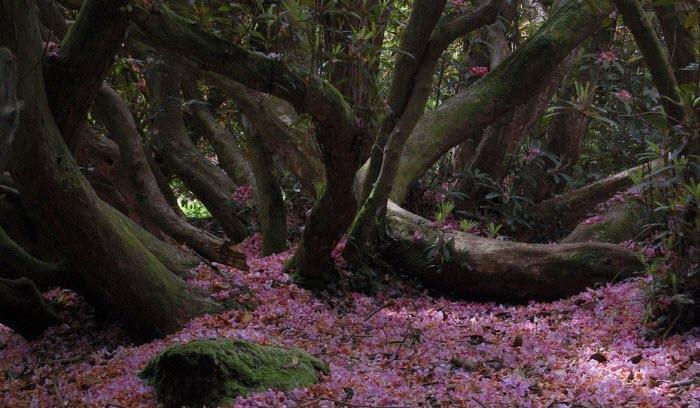 اسرار گمشده باغ گیاه شناسی انگلیس + تصاویر